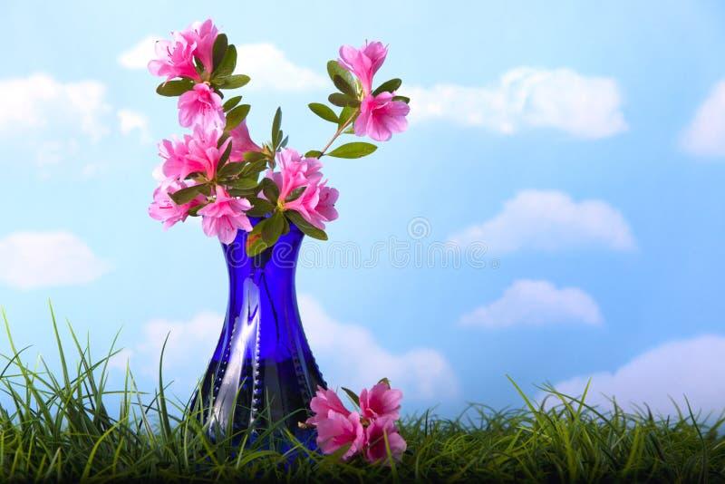 Rosafarbene Azaleeblumen im blauen Vase lizenzfreie stockfotos