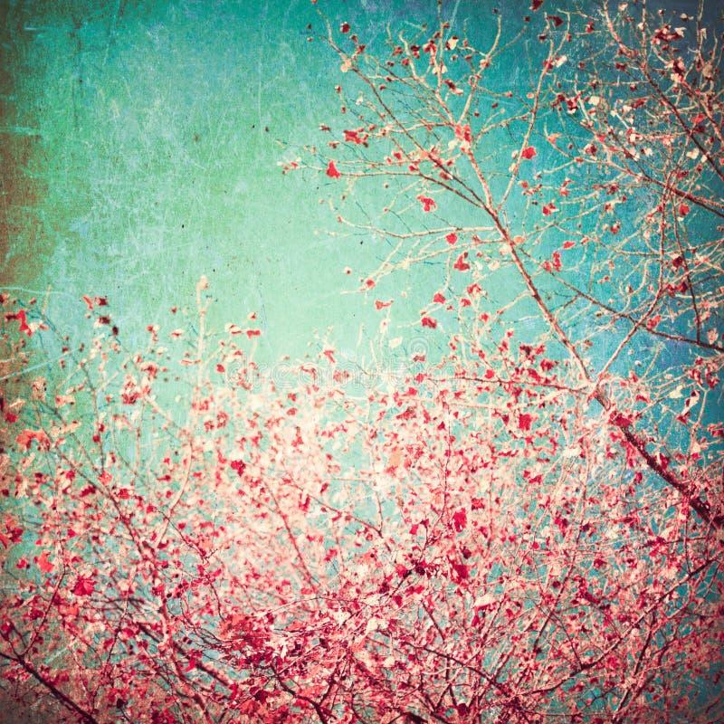 Rosafarbene Blätter auf blauem Himmel stockbild
