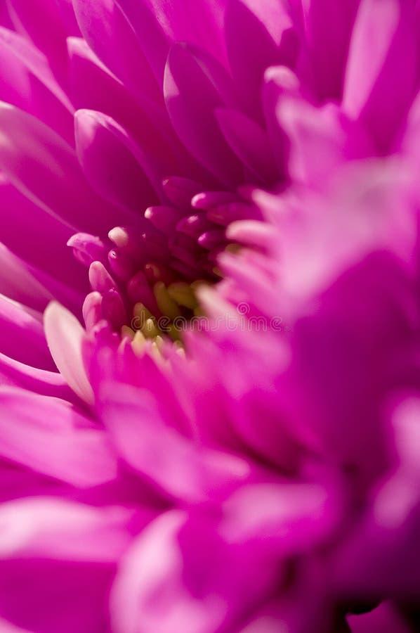 Rosafarbene Blume stockfotografie