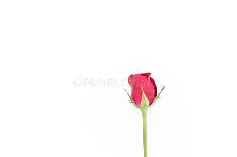 Rosafarbene Blume des Rotes stockbilder