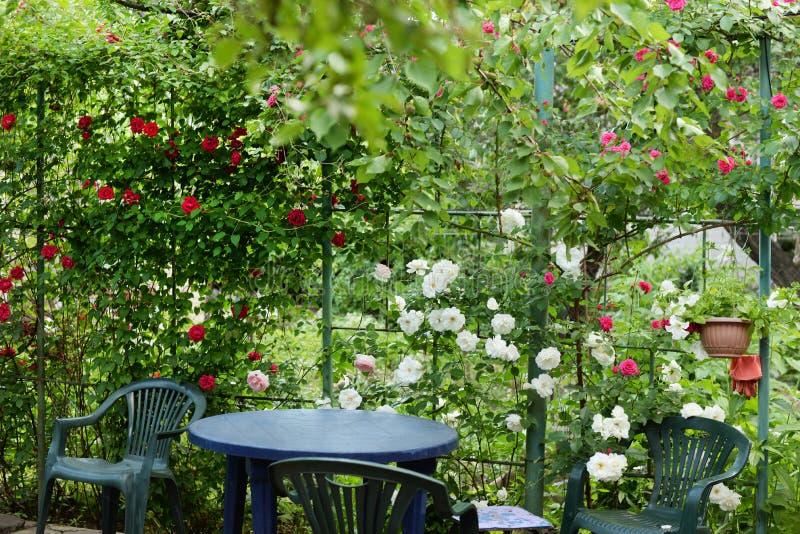 rosafarbene Blume, die im Rosengarten auf Blumen der roten Rosen des Hintergrundes blüht stockfoto