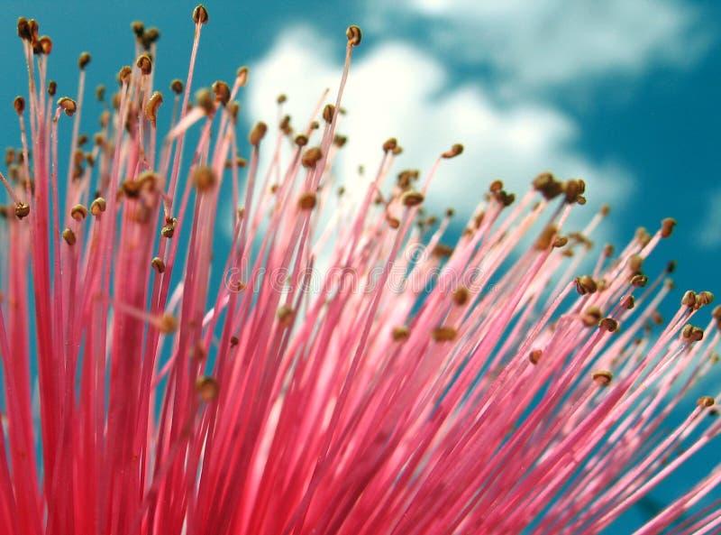 Rosafarbene Blume und Wolken stockfotos