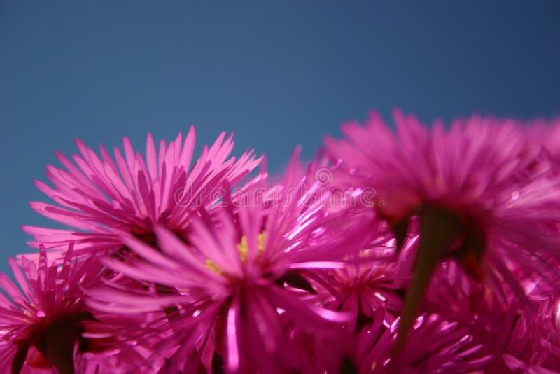Rosafarbene Blumen Lizenzfreie Stockfotografie