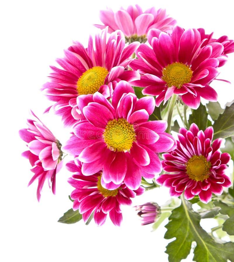 Rosafarbene Blumen in der Blüte stockbild