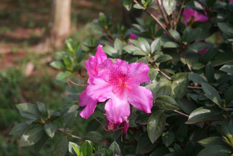 Rosafarbene Blumen und Grünblätter stockbilder