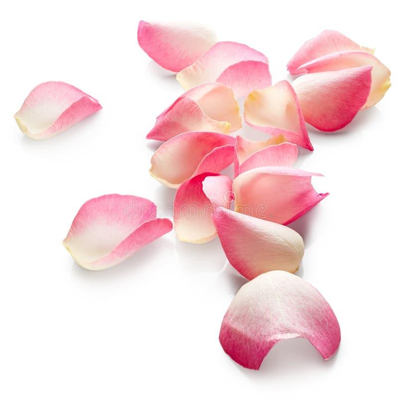 rosafarbene Blumenblätter stockbilder