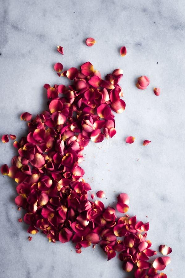 rosafarbene Blumenblätter auf Marmorierungflatlay - Hochzeit, Feiertag und Blumenhintergrund angeredetes Konzept stockfotografie
