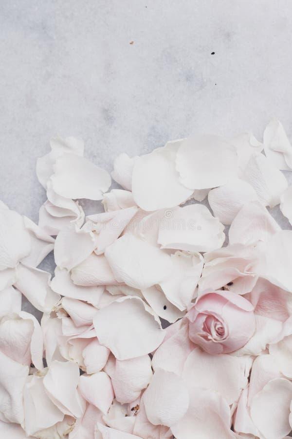 rosafarbene Blumenblumenblätter auf Marmor - Hochzeit, Feiertag und Blumengarten angeredetes Konzept lizenzfreies stockbild