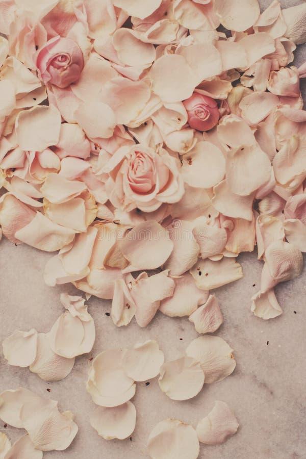 rosafarbene Blumenblumenblätter auf Marmor - Hochzeit, Feiertag und Blumengarten angeredetes Konzept lizenzfreies stockfoto