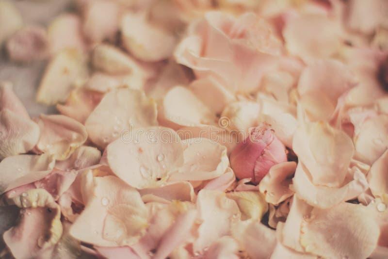rosafarbene Blumenblumenblätter auf Marmor - Hochzeit, Feiertag und Blumengarten angeredetes Konzept lizenzfreie stockbilder
