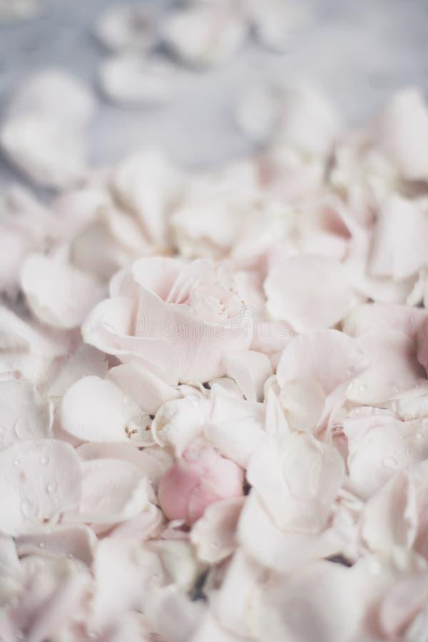 rosafarbene Blumenblumenblätter auf Marmor - Hochzeit, Feiertag und Blumengarten angeredetes Konzept lizenzfreie stockfotografie