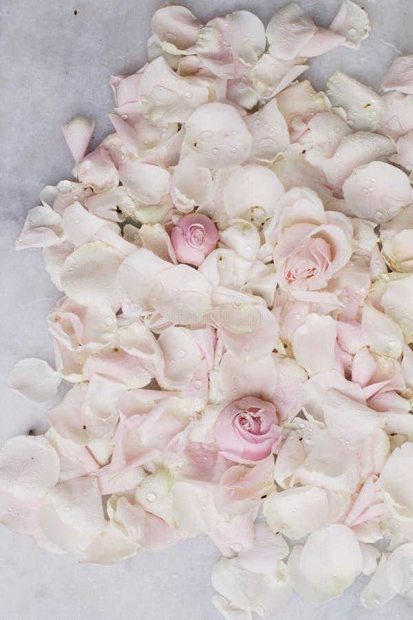 rosafarbene Blumenblumenblätter auf Marmor - Hochzeit, Feiertag und Blumengarten angeredetes Konzept stockfoto