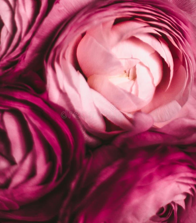 rosafarbene Blumennahaufnahme - Hochzeit, Feiertag und Blumenhintergrund angeredetes Konzept lizenzfreie stockfotos