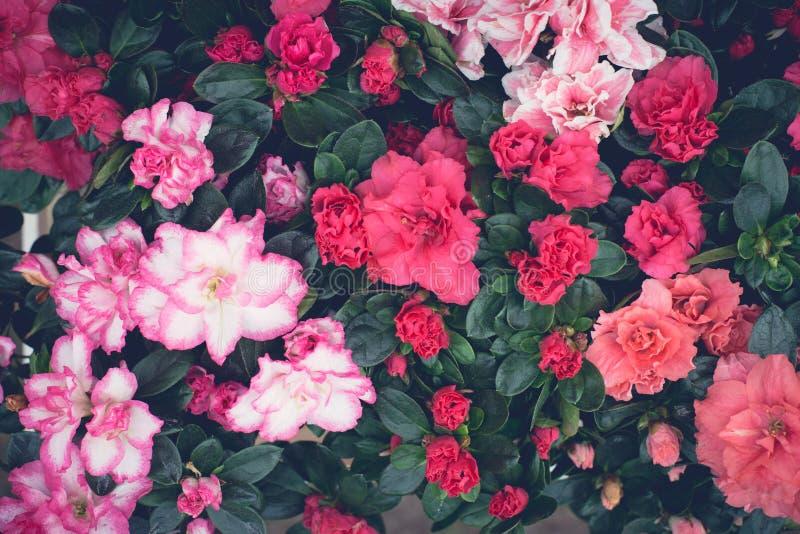 Rosafarbene Blumentapete stockbild