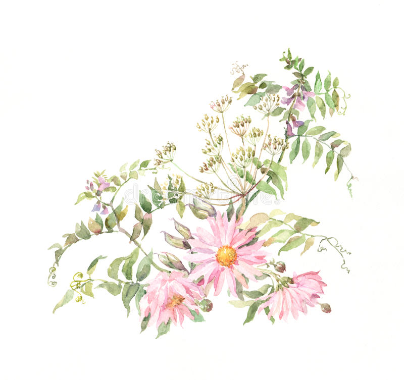 Rosafarbene Chrysanthemen mit Gras vektor abbildung
