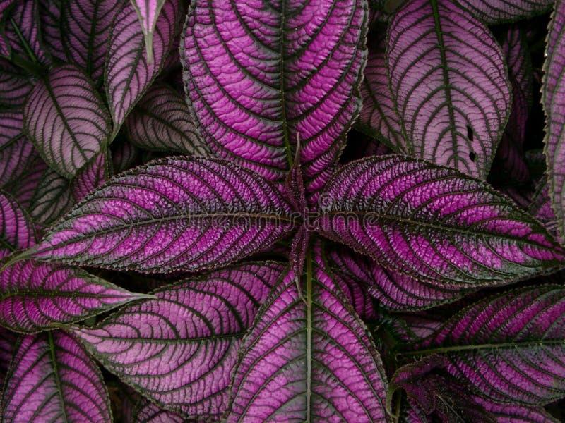 Rosafarbene Farbe stockfotografie