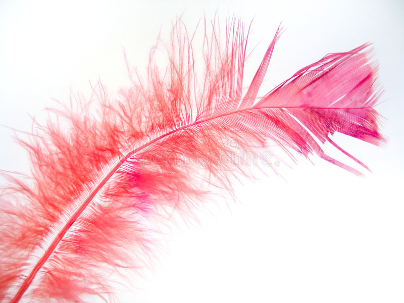 Rosafarbene Feder 2 lizenzfreie stockfotografie
