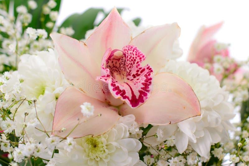 Rosafarbene Lilie getrennt auf weißem Hintergrund lizenzfreie stockfotos