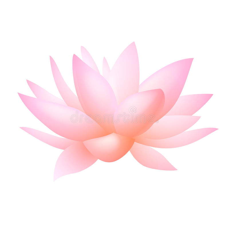 Rosafarbene Lotos- Oder Wasserlilienblume. Vektor Stockfotos
