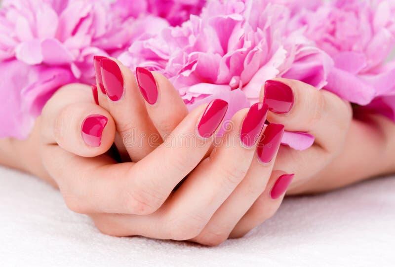 Rosafarbene Maniküre und eine Blume stockbilder