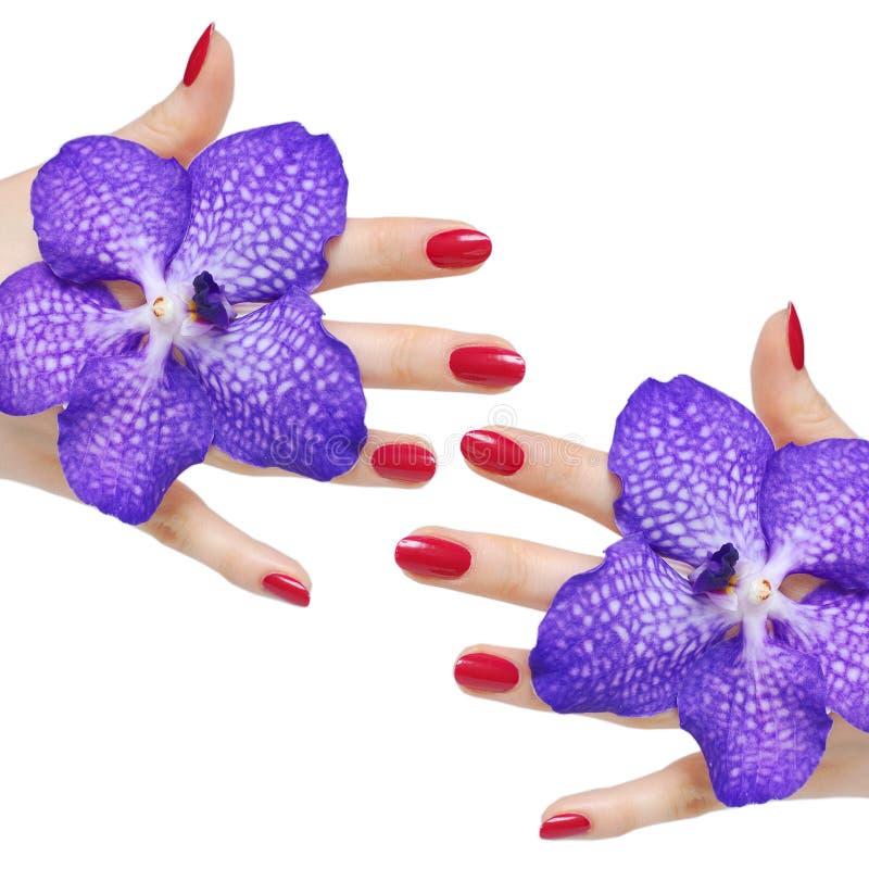 Rosafarbene Maniküre und Orchideen lizenzfreie stockfotos