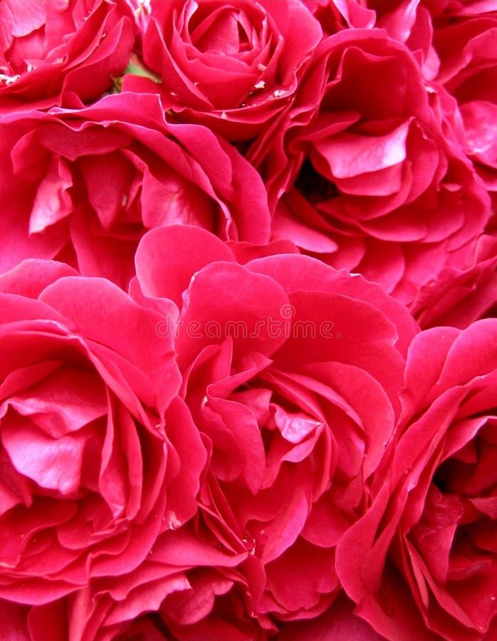 Rosafarbene Neigung Stockbild