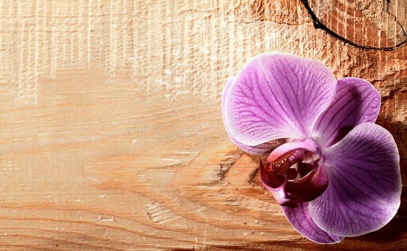 Rosafarbene Orchideeblume über hölzernem Schreibtisch stockbilder