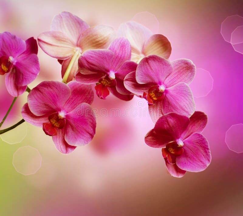 Rosafarbene Orchideen stockfoto