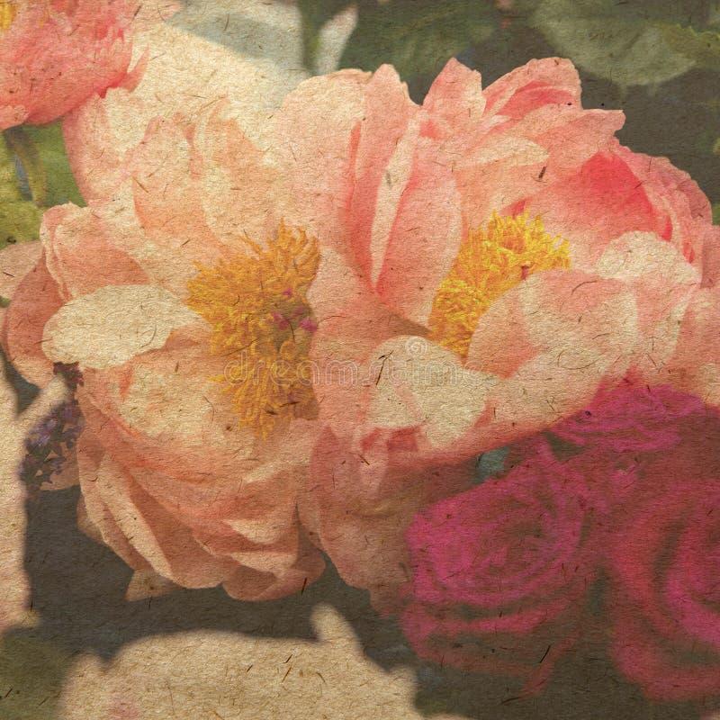 Rosafarbene Pfingstrose stock abbildung