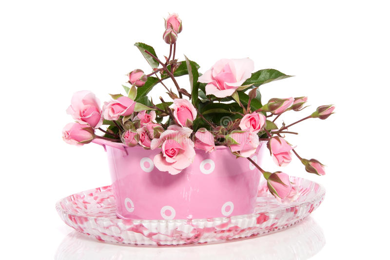 Rosafarbene Rosen in einer rosafarbenen Wanne lizenzfreie stockfotos