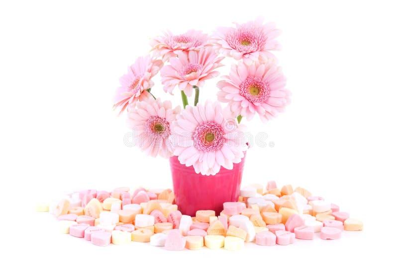 Rosafarbene süße Gerber Blumen lizenzfreie stockbilder