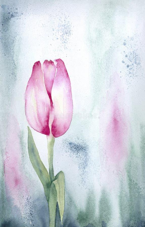 Rosafarbene Tulpe lizenzfreie abbildung