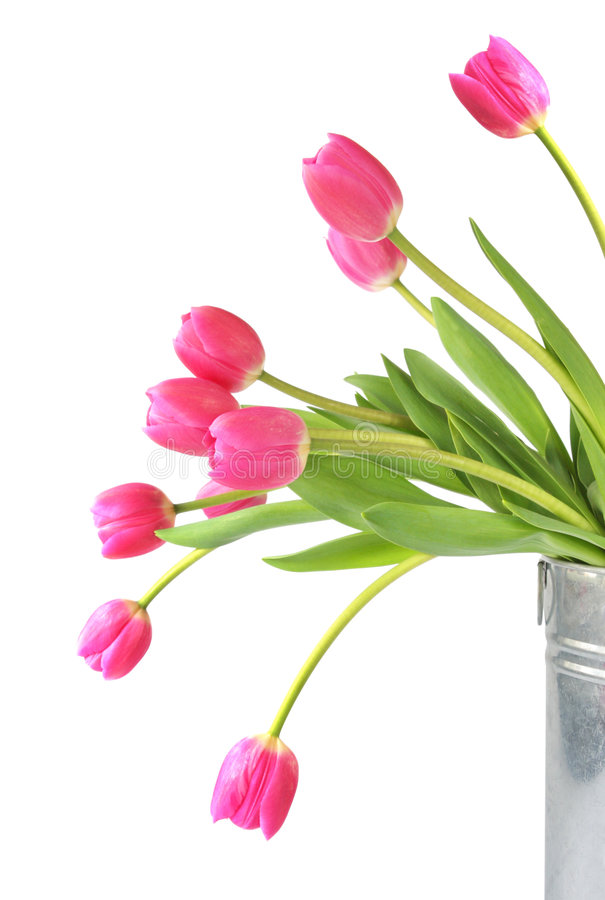 Rosafarbene Tulpen lizenzfreies stockfoto