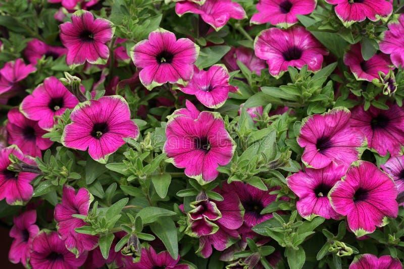 Rosafarbene und grüne Blumen lizenzfreie stockfotos