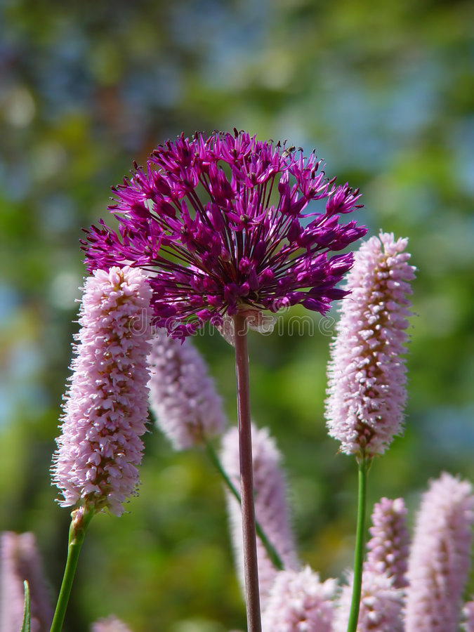 Rosafarbene Und Purpurrote Blumen Stockfoto