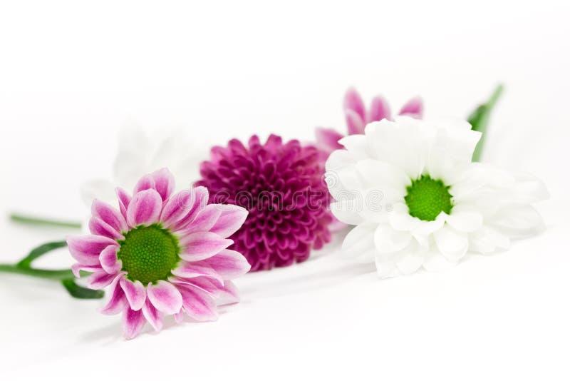 Rosafarbene und weiße Blumen stockfotos