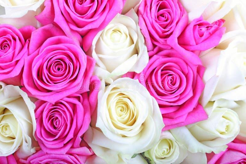 Rosafarbene und weiße Rosen. lizenzfreies stockbild