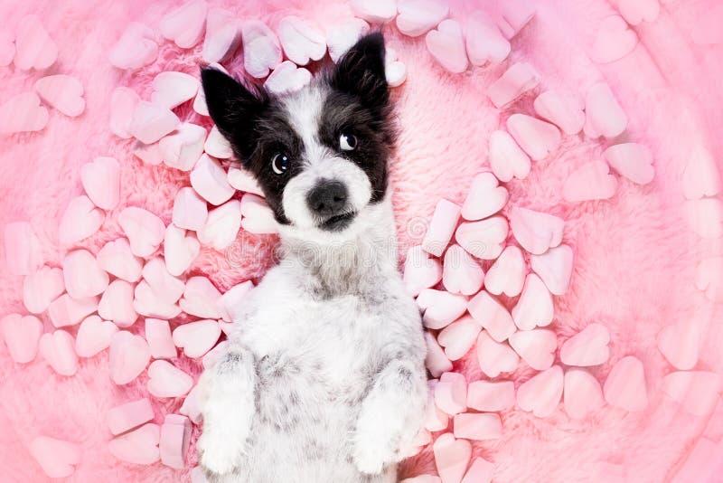 Rosafarbene Valentinsgrüße der Hundeliebe lizenzfreie stockfotos