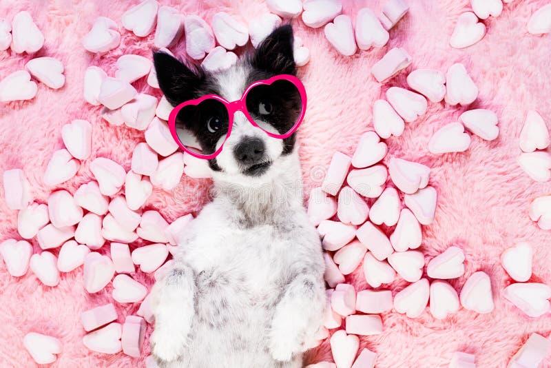 Rosafarbene Valentinsgrüße der Hundeliebe lizenzfreie stockbilder