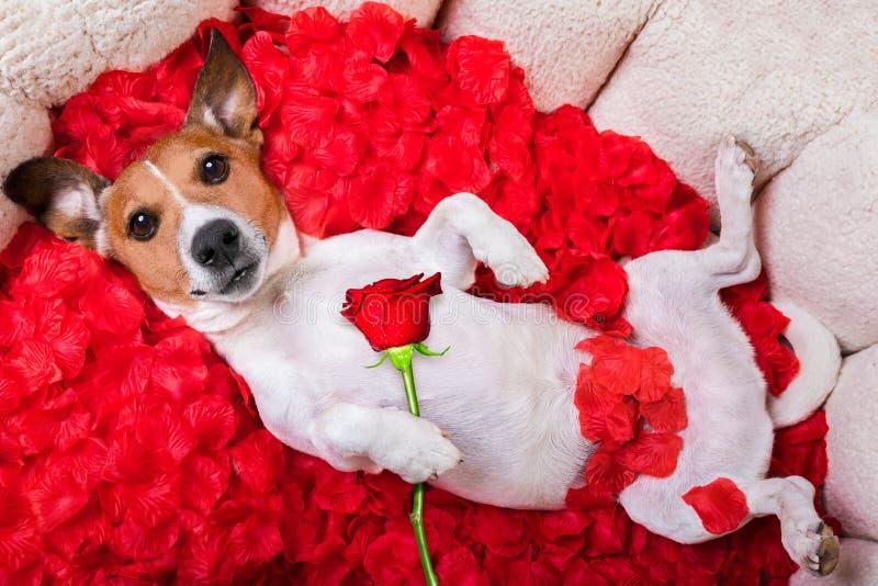 Rosafarbene Valentinsgrüße der Hundeliebe stockfoto