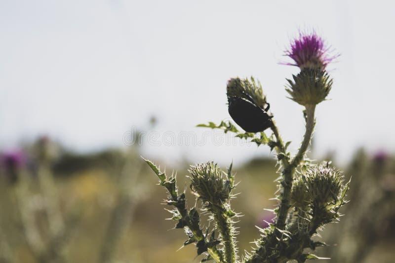 Rosafarbene Wildflowers stachelig Weicher Fokus Es gibt einen Platz f?r Text lizenzfreie stockbilder