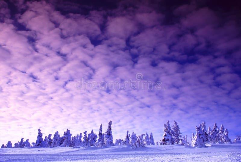 Rosafarbene Winter-Dämmerung stockfotos