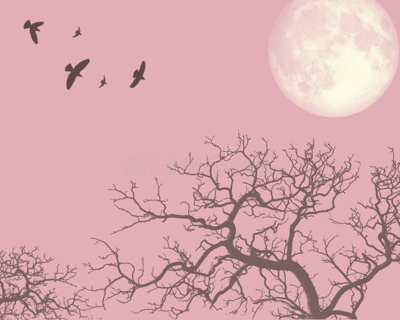 Rosafarbener Abend stockbild
