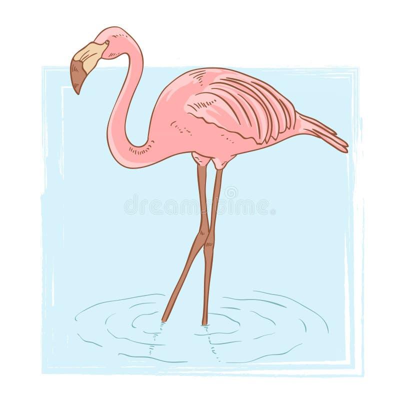 Rosafarbener Flamingo, der im Wasser steht vektor abbildung