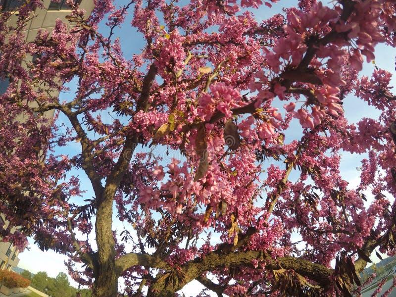 Rosafarbener Frühling stockbild