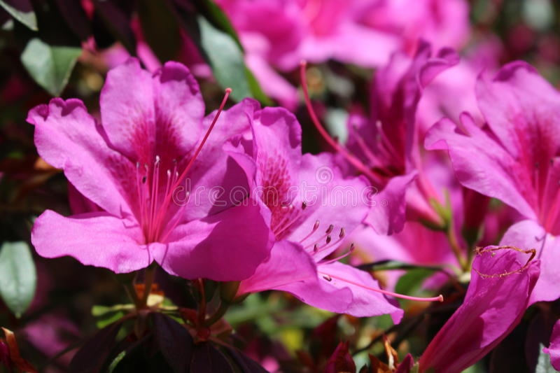 Rosafarbener Frühling lizenzfreie stockfotografie