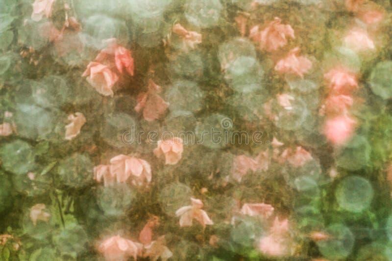 Rosafarbener Hintergrund der Weinlese lizenzfreie abbildung