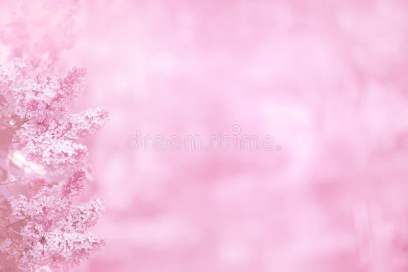 Rosafarbener Hintergrund mit lila Blumen stockfotos