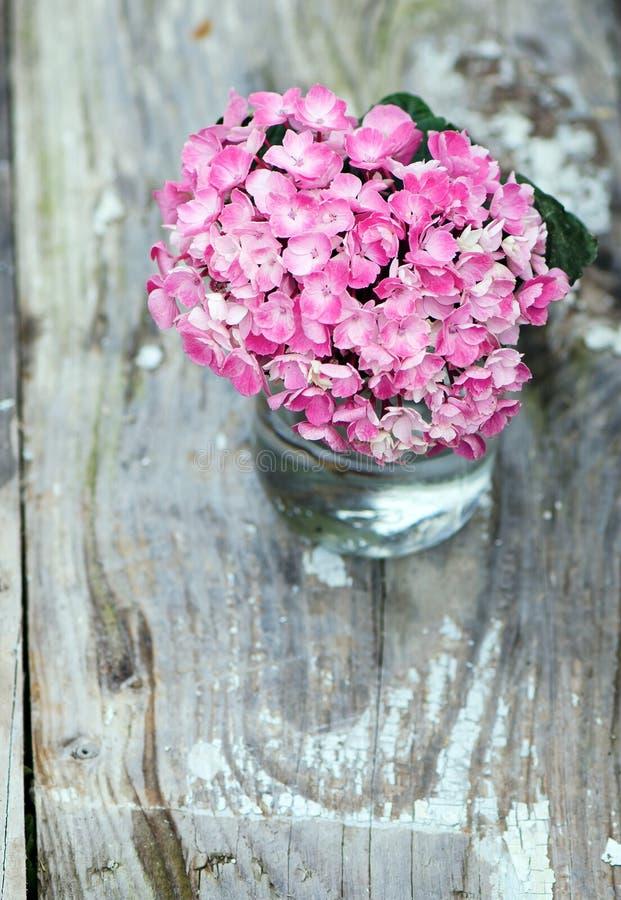 Rosafarbener Hydrangea lizenzfreie stockfotografie