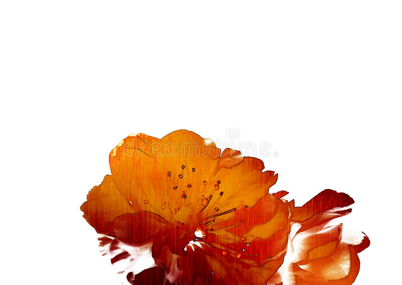 Rosafarbener Jasmin auf einem weißen Hintergrund. lizenzfreie abbildung